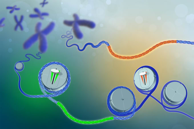 Image representing regions of accessible chromatin in the genome. These sections of the genome work to control how genes are turned off and on. Credit: Darryl Leja, National Human Genome Research Institute, NIH