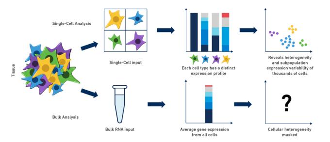 Figure 1. Single-cell RNA-seq reveals cellular heterogeneity that is masked by bulk RNA-seq methods.