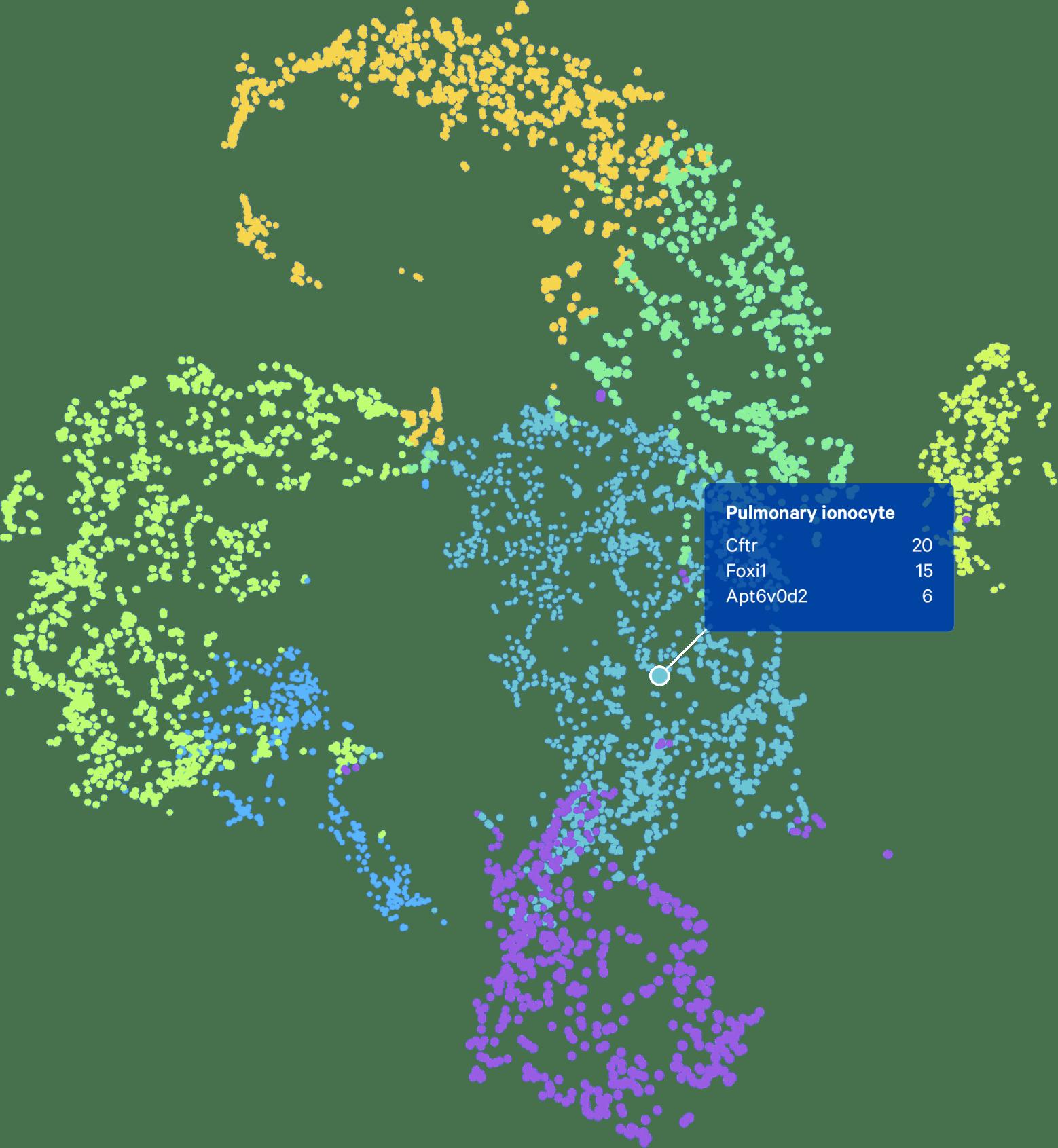 シングルセル遺伝子発現解析