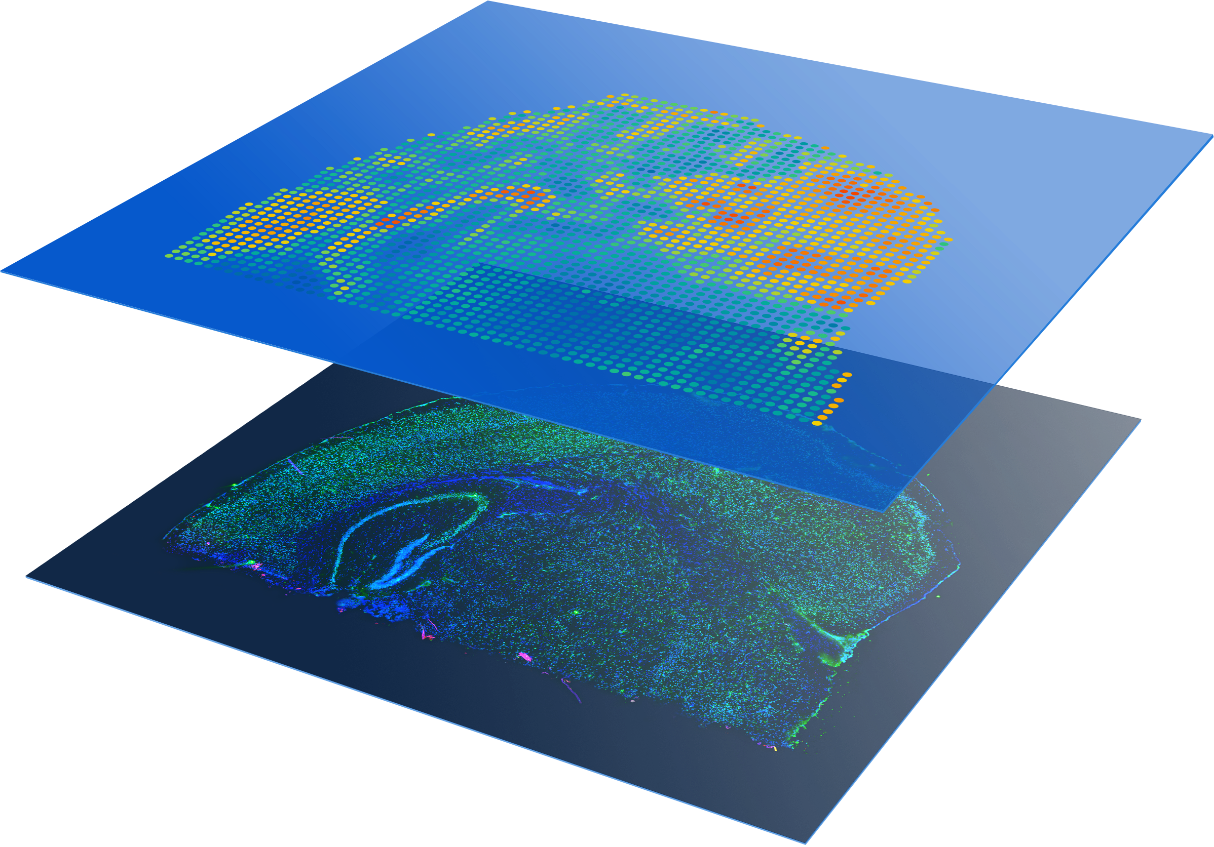 Spatial Proteomics